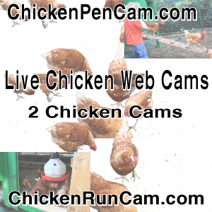 300x250 Lower Primary Sidebar Chickens